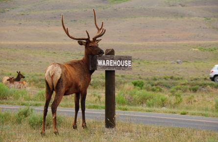 elk with warehouse sign