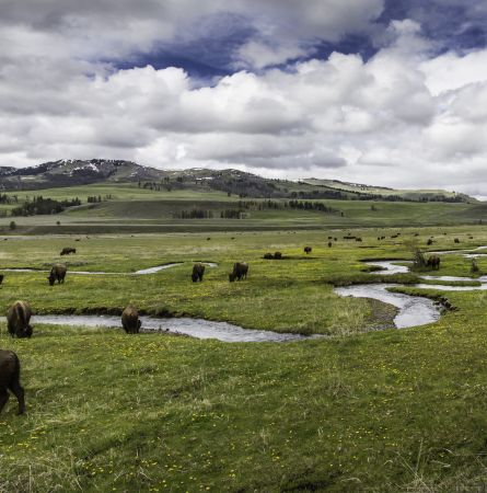 Guide to Watching Wildlife in Yellowstone By Month