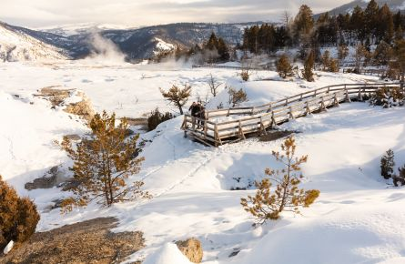 Inspecting tracks in the snow at Mammoth Hot Springs during winter