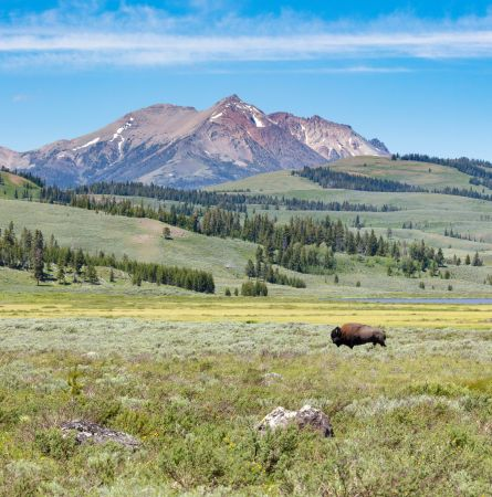 What's Different and What's the Same in Yellowstone this Summer