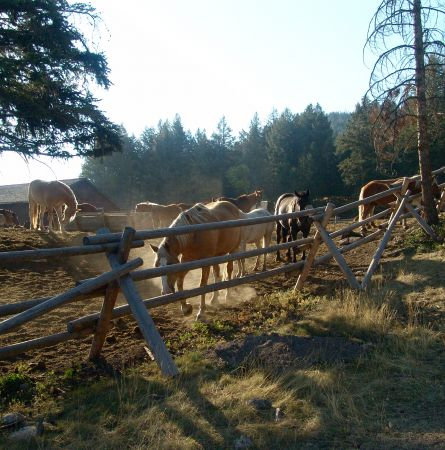 Horses of Yellowstone: Tales from the Corral
