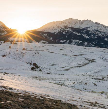 Winter Rejuvenation in Yellowstone